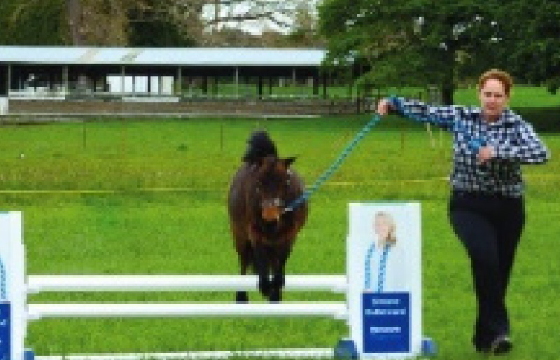 AMHC's Miniature Horse Event